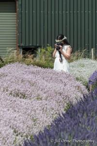150721 10 Cotswold Lavender