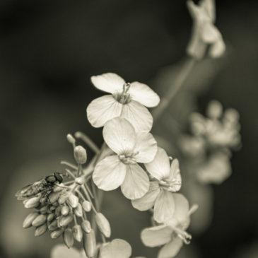 Mono Monday: Spring