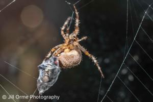 151012 2 spider