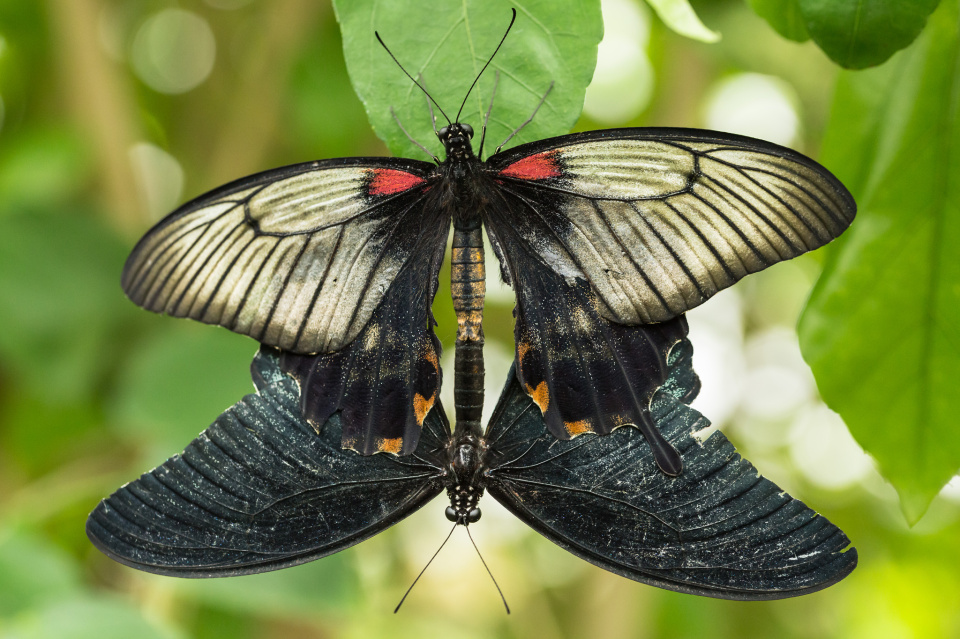 Butterfly lurv
