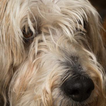 Emergency hound macro