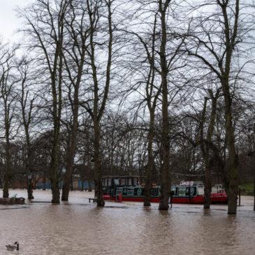 Swimming through the park