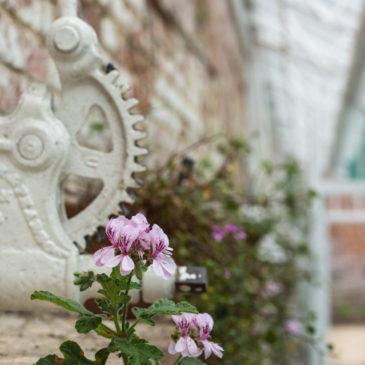 Pelargonium House