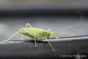 160904 9 cricket