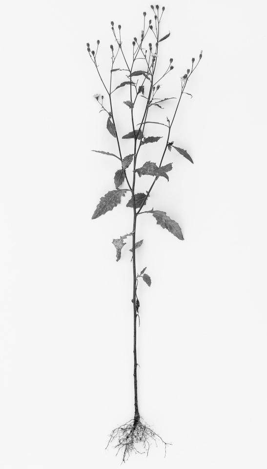 Mono Monday: Roots