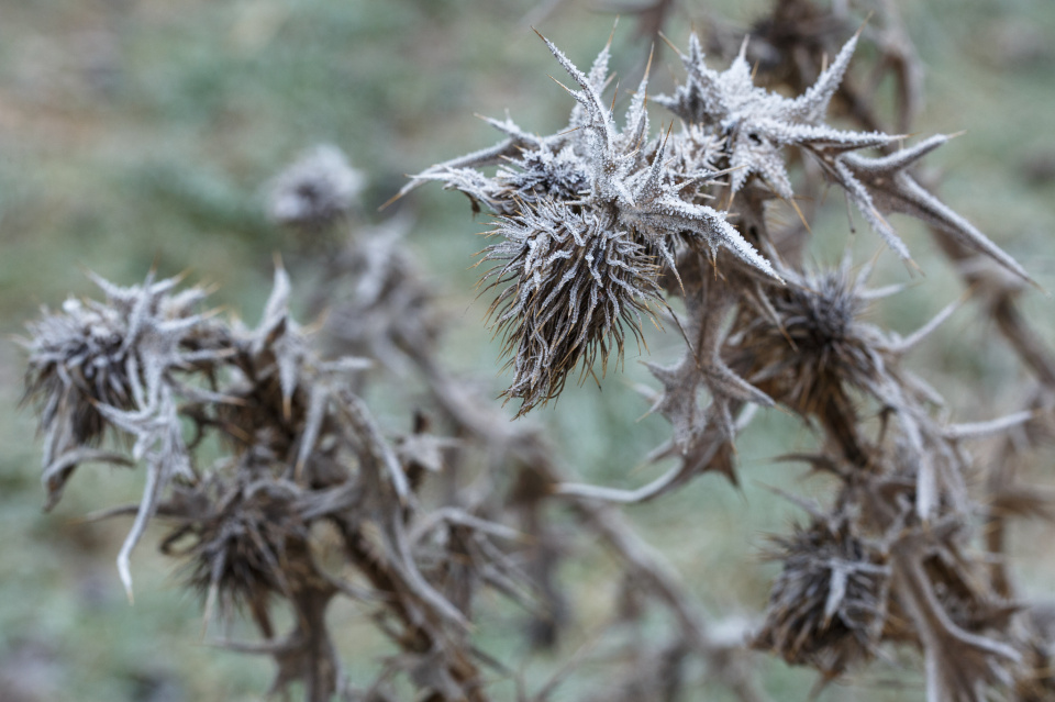 Frosty and spiky