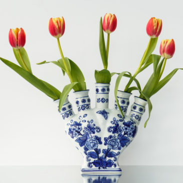 Tulips from….