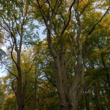 Hanbury Wood Blipmeet