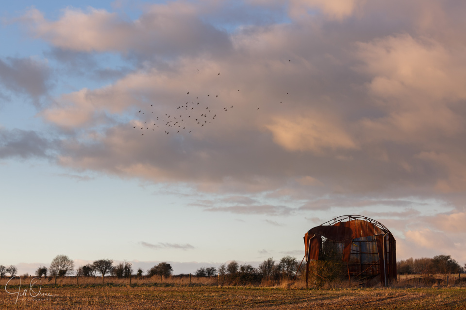 A parcel of linnets