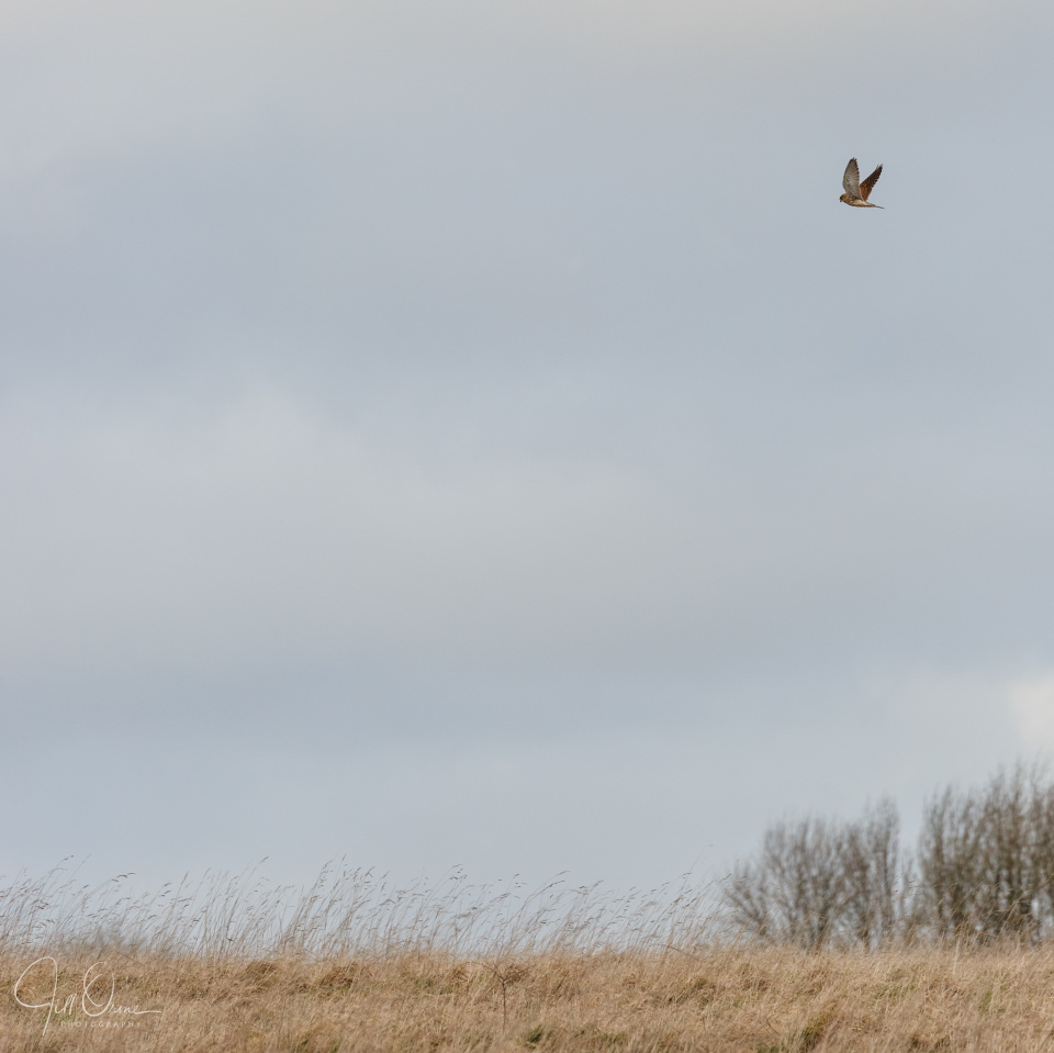 Owls yesterday…