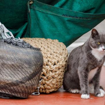 Old sea cat