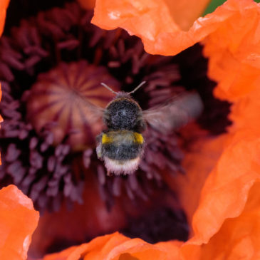 Bumbling about
