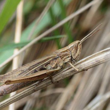 Lesser Marsh