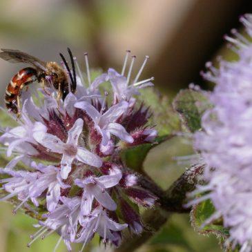 Nectar plunge