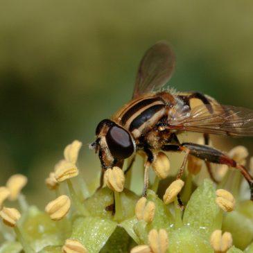 Shade fly