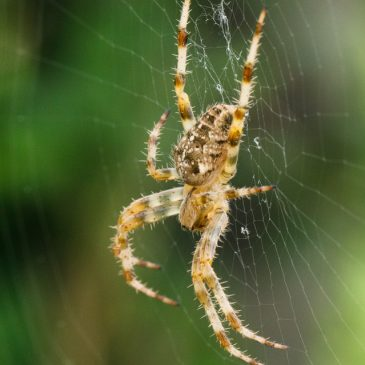 Spider season