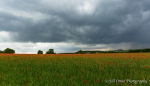 Stow-on-the-Wold poppies